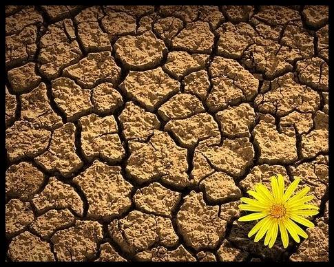 flor_deserto-1